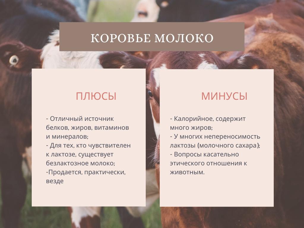 коровье молоко плюсы минусы